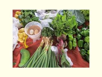 Encontro Nacional sobre segurança alimentar publica carta sobre desafios à alimentação saudável no Brasil