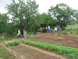 Agroecologia, elemento importante para a Convivência com o Semiárido