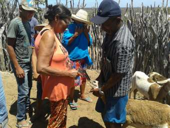 Dia de Campo em Uauá destaca o uso de produtos naturais para sanidade animal