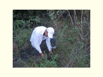 Luta pelo Cerrado em pé une comunidades tradicionais de Fecho de Pasto