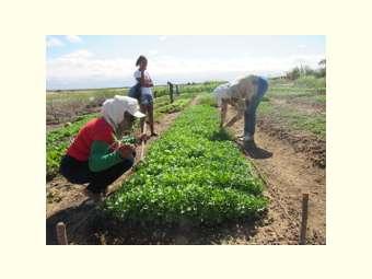Reforma da Previdência pode ser o fim da aposentadoria rural, afirmam agricultores