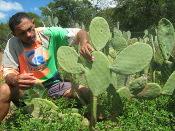 Palma: excelente forragem e alimento humano rico em vitaminas e sais minerais