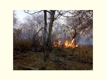 Incêndio destrói área preservada da Caatinga em Campo Alegre de Lourdes