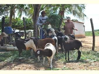 Recurso do Projeto Ater permite que famílias do Salitre invistam na criação de animais