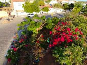 Jardins urbanos: beleza que alimenta o olhar e alma