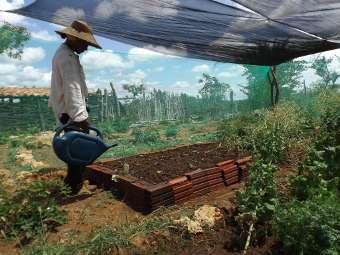 Terra, água e disposição melhoram qualidade de vida de agricultora