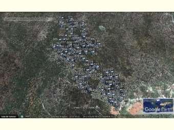 Parceria entre Embrapa e Coopercuc promove o georreferenciamento de umbuzeiros nos municípios de Curaçá e Uauá, no norte da Bahia