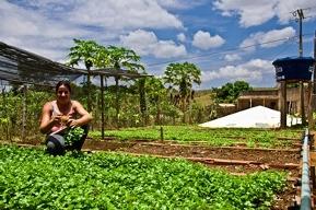 Em 2013, ação da ASA chegará para mais de 48 mil famílias no Semiárido