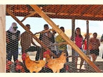 Agentes comunitários visitam experiências de produção durante oficina em Remanso