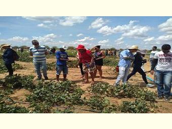 Projeto Agrobiodiversidade do Semiárido facilita o acesso e a multiplicação de sementes crioulas