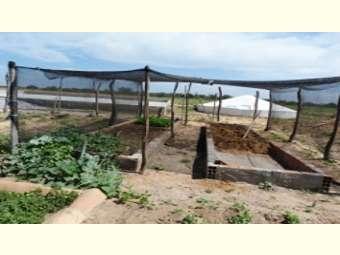 Chuvas de dezembro garantem água armazenadas em cisternas para a produção de alimentos