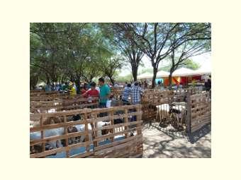 Associação Comunitária e Agropastoril de Cipó demonstra a viabilidade da caprinocultura na região semiárida