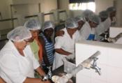 IRPAA incentiva produção e comercialização da Agricultura Familiar no Território Sertão do São Francisco