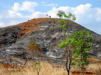 Qualidade do solo declina no mundo inteiro