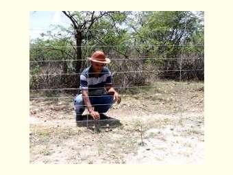 Moradores/as da comunidade Vereda da Onça finalizam cercamento de área para Recaatingamento