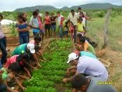 Seminário com educadores/as discute Projeto Horta nas Escolas