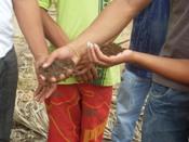 IRPAA realiza 20ª Escola de Formação para Convivência com o Semiárido