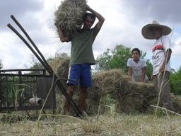 Agricultor baiano estocou água e alimento e está produzindo apesar da estiagem