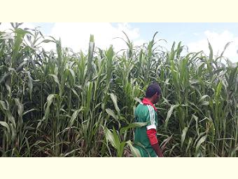 Agricultores e agricultoras de Remanso ampliam a produtividade e o estoque de alimento nas propriedades