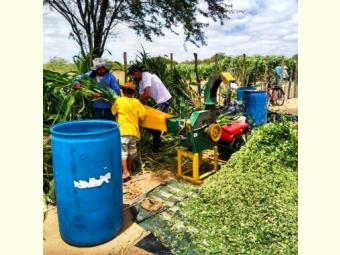 Produção coletiva de forragens gera bons resultados em Juazeiro