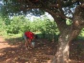 Município de Manoel Vitorino realiza IX Festival do Umbu