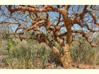 Pesquisador do Insa descobre alternativas para controle do Aedes aegypti com espécies da Caatinga