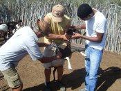 Região de Pinhões conta com ações articuladas de Projetos gerenciados pelo IRPAA
