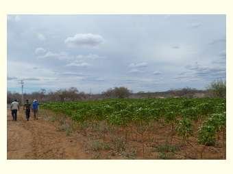 Ater contribui com implementação de projeto de estruturação familiar em Pinhões