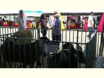 Distrito de Juremal sedia IV Feira de caprinos e ovinos