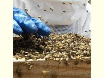 Biólogo explica possíveis causas de ataques de abelhas na Bahia e Pernambuco, e destaca a importância de preservar a natureza