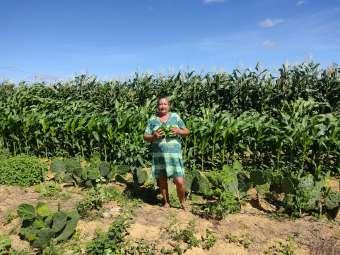 Quintais forrageiros inspiram famílias agricultoras a diversificarem produção nos agroecossistemas